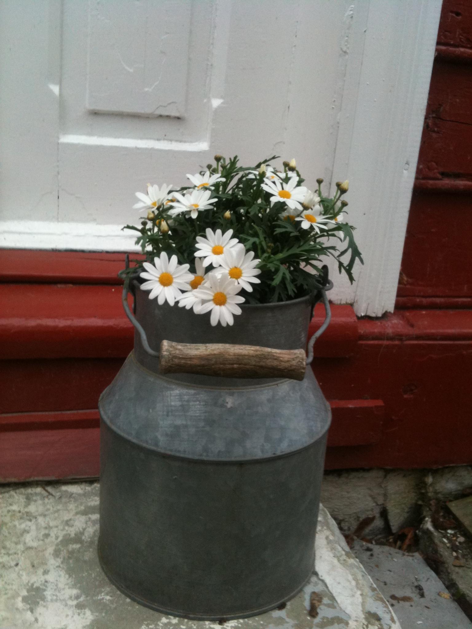 Rydde, luke, plante, grille og nyte den skjønne årstiden i vår bittelillehage! Share on Facebook Follow