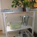 hvitbeiset plantebord