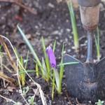 Spaden er klar for vårens hagearbeid